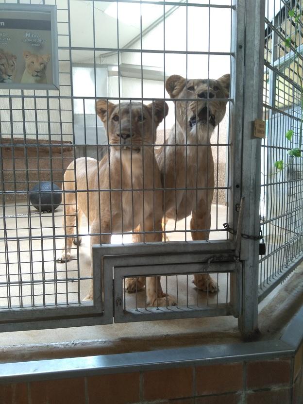 Uittip zomervakantie Duisburg Zoo 2