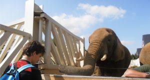Doe eens iets anders met je foto maak er een 3D poster van olifant
