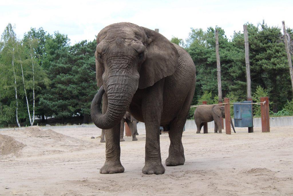 Ga op safari in eigen land en bezoek Beekse Bergen olifant