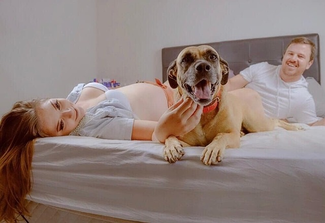 12 Mythes rondom de zwangerschap ontkracht huisdieren